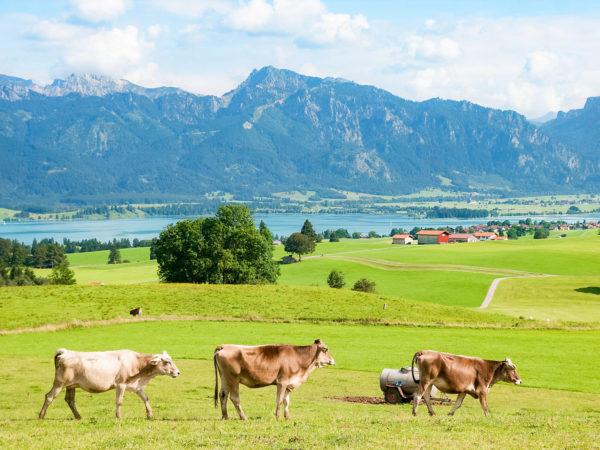 Bei einem Überblick unserer Klassenfahrt Ziele darf der bayrische Wald nicht fehlen.