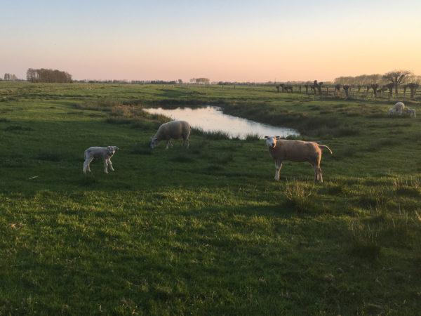 Klassenfahrt Ausland: Eine Klassenfahrt nach Holland besticht mit einfachem Landleben und weitem Blick