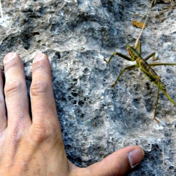 Klettern, Naturpädagogik und Ökologie laufen bei unserem Ansatz Hand in Hand.