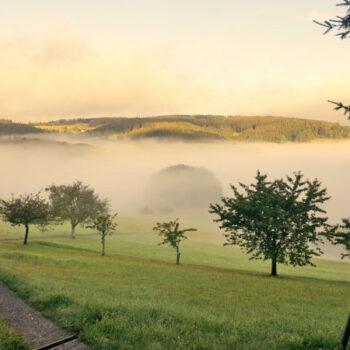 Morgendämmerung bei einer Visionssuche im Schwarzwald