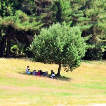 Einfach mal auf der Wiese liegen und im Schatten chillen...