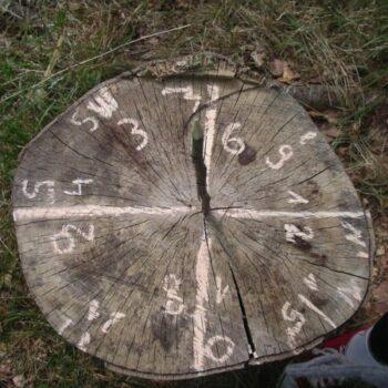 Ein Baum, der die Zeit vorhersagen kann? Bei N.E.W. gibt es wirklich alles!