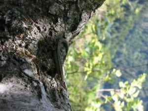Die kleinen Waldbewohner hautnah beobachten und miterleben!