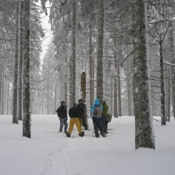 Auch im Wald gibt es viel zu entdecken!