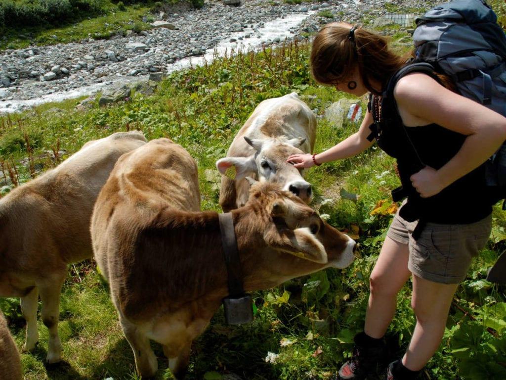 Es begegnen uns immer wieder tierische Weggefährten während unserer Wanderung.