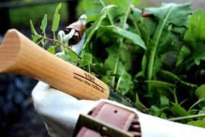 Gern machen wir mit Euch einen tollen Wildkräutersalat. und zaubern danach weitere Module aus unserem Baukasten