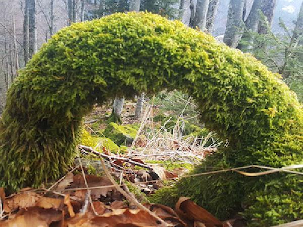 Schönheit des Schwarzwalds