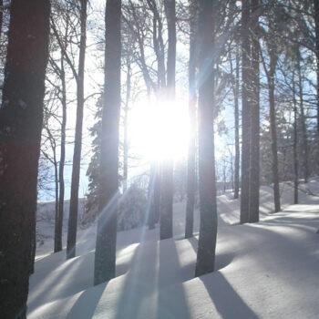 Zauberhafter Winterwald erwartet Wuch auf erlebnispädagogischen Winterklassenfahrten